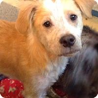 Adopt A Pet :: Moran - Jacksonville, FL