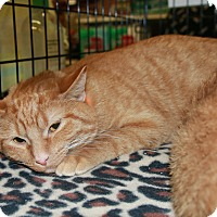 Adopt A Pet :: OJ Kingston - Rochester, MN