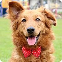 Adopt A Pet :: Ellie - San Francisco, CA