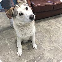 Adopt A Pet :: JASPER - Los Angeles, CA
