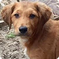 Adopt A Pet :: Jake - Southlake, TX