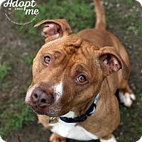 Adopt A Pet :: Charlotte - Lyons, NY