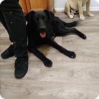 Adopt A Pet :: Sassy - Harbor City, CA