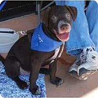 Adopt A Pet :: Hailey - Minneola, FL