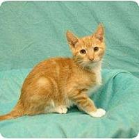 Adopt A Pet :: Paws - Sacramento, CA