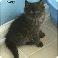 Adopt A Pet :: Fuzzy - Jacksonville, FL