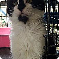 Adopt A Pet :: Randall - Santa Monica, CA