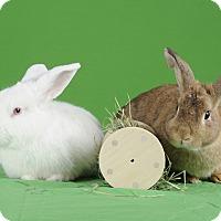 Adopt A Pet :: Logan and Winthrop - Marietta, GA