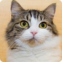 Adopt A Pet :: Addison - Irvine, CA