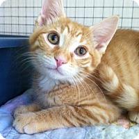 Adopt A Pet :: Uno - Trevose, PA