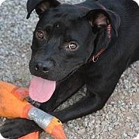 Adopt A Pet :: Shade - Athens, GA
