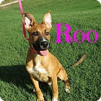 Adopt A Pet :: Roo - Scottsdale, AZ