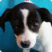 Adopt A Pet :: Yoki - Plainfield, CT