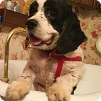 Adopt A Pet :: Remington - Sugarland, TX