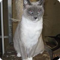 Adopt A Pet :: Lily - San Ysidro, CA