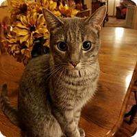 Adopt A Pet :: Stormy - Surprise, AZ