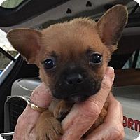 Adopt A Pet :: Glenda#1M - Orlando, FL