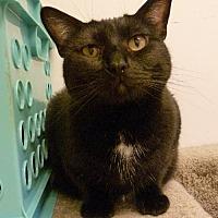 Adopt A Pet :: Devinity - Westville, IN