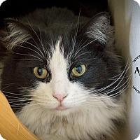 Adopt A Pet :: Magpie - Gardnerville, NV