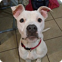 Adopt A Pet :: Margo - Dayton, OH