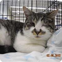 Adopt A Pet :: Elvis - Riverside, RI