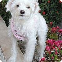 Adopt A Pet :: Candy - La Habra Heights, CA