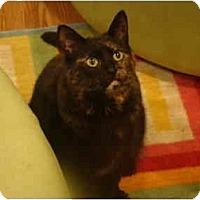 Adopt A Pet :: Nola - Muncie, IN