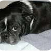 Adopt A Pet :: Riley - Eagle, ID