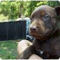 Adopt A Pet :: May (pending adoption) - Adamsville, TN