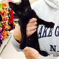 Adopt A Pet :: Raj - Troy, OH