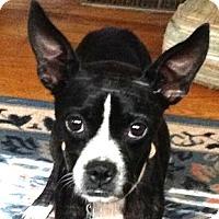 Adopt A Pet :: HOPE - North Augusta, SC