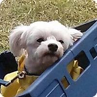 Adopt A Pet :: Trooper - Ormond Beach, FL