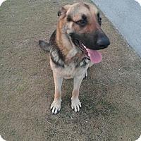Adopt A Pet :: Rocco - Pompano Beach, FL