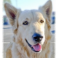 Adopt A Pet :: Luna URGENT needs FOSTER NOW - Sacramento, CA