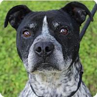 Adopt A Pet :: ROYCE - Red Bluff, CA