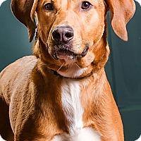 Adopt A Pet :: Jackson - DRD program - Owensboro, KY