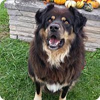 Adopt A Pet :: Tobias - Wapakoneta, OH