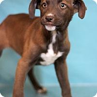 Adopt A Pet :: Windsong - Waldorf, MD