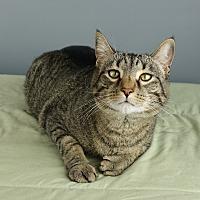 Adopt A Pet :: Weber - Columbia, IL