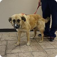 Adopt A Pet :: Jade - Oviedo, FL