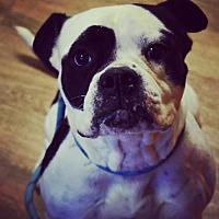 Adopt A Pet :: Lolita - Seattle, WA