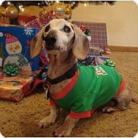 Adopt A Pet :: Pete - San Jose, CA