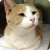 Adopt A Pet :: Mozzarella - Fairfield, CT