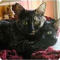 Adopt A Pet :: Estella (with Miella) - Portland, OR
