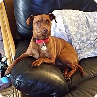 Adopt A Pet :: Eli - Oceanside, CA