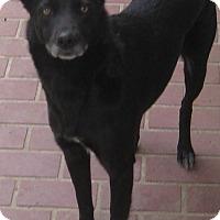 Adopt A Pet :: Logan - Columbus, NE