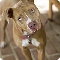 Adopt A Pet :: Maya - Baton Rouge, LA