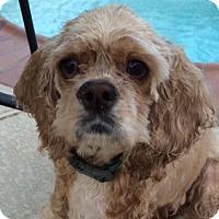 Adopt A Pet :: Gracie - Sugarland, TX