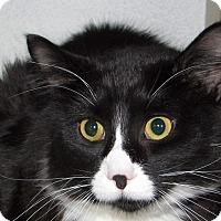 Adopt A Pet :: Joey - Ruidoso, NM