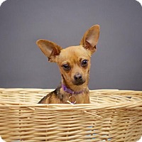Adopt A Pet :: *Emma Lou's Kibble - Pittsburg, CA